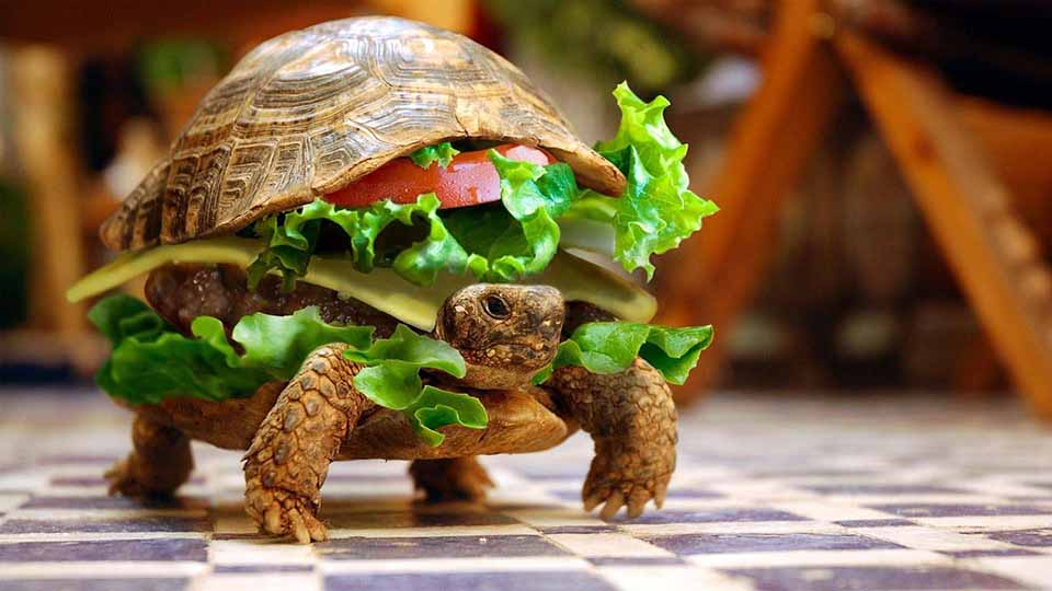 Funny-Turtle-With-Vegetables